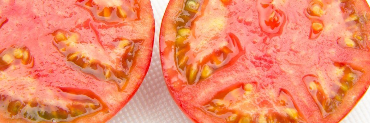 cuándo plantar tomates